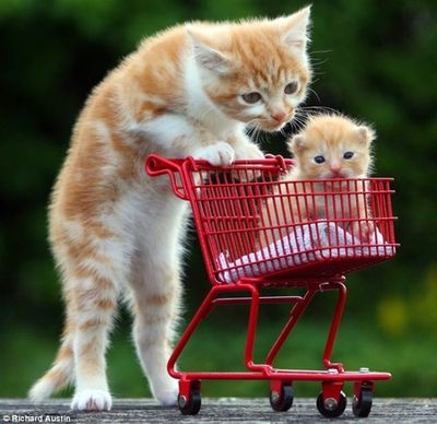 Trolley cat