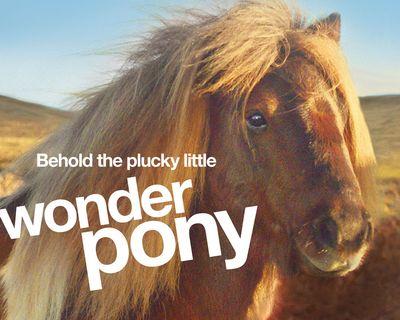 Pony-header.jpg