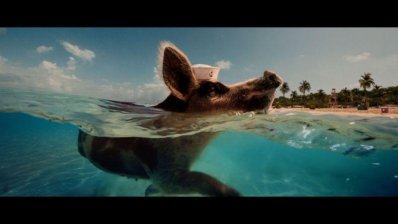 W+K - AB2 - Taking of Piggy Island 8